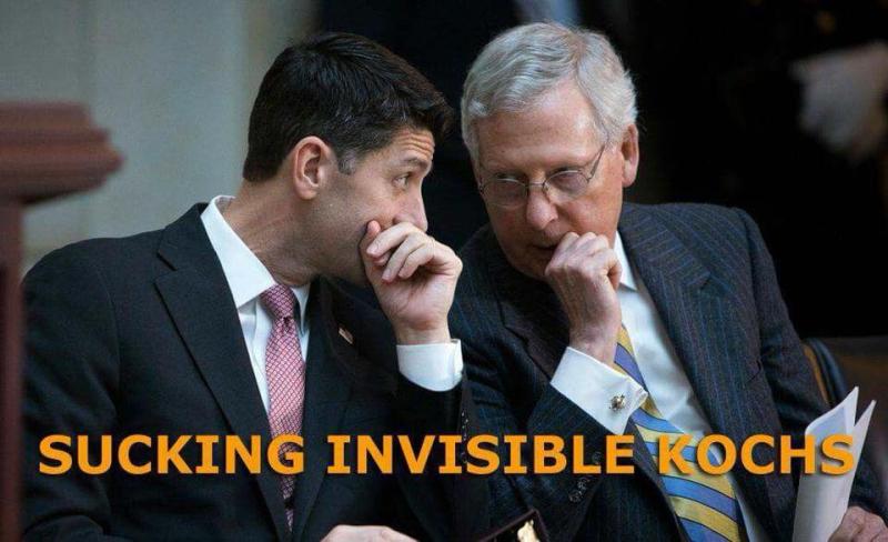 InvisibleKochSucking
